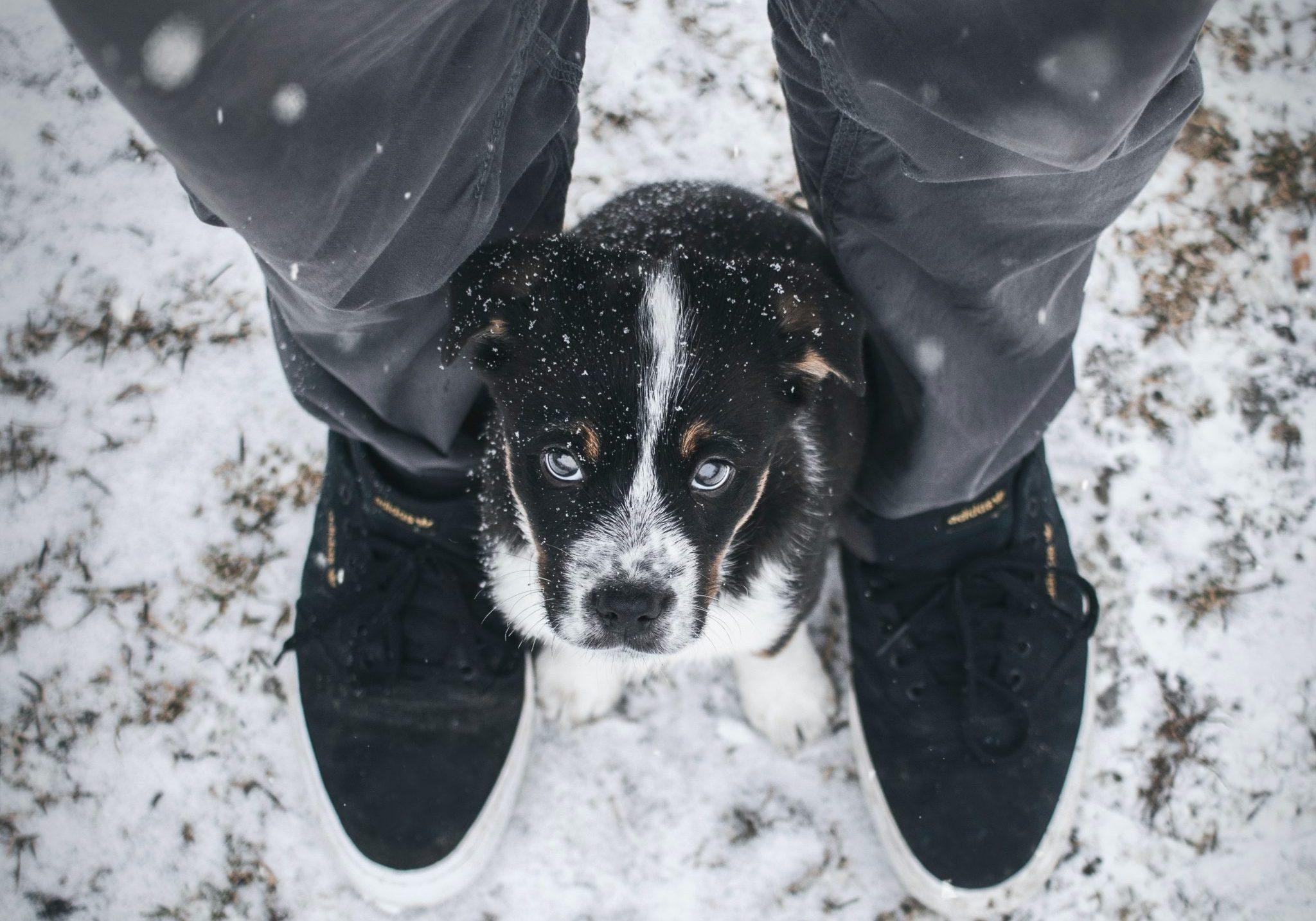 Ha kiteszel egy kutyát az utcára, az szemétség!