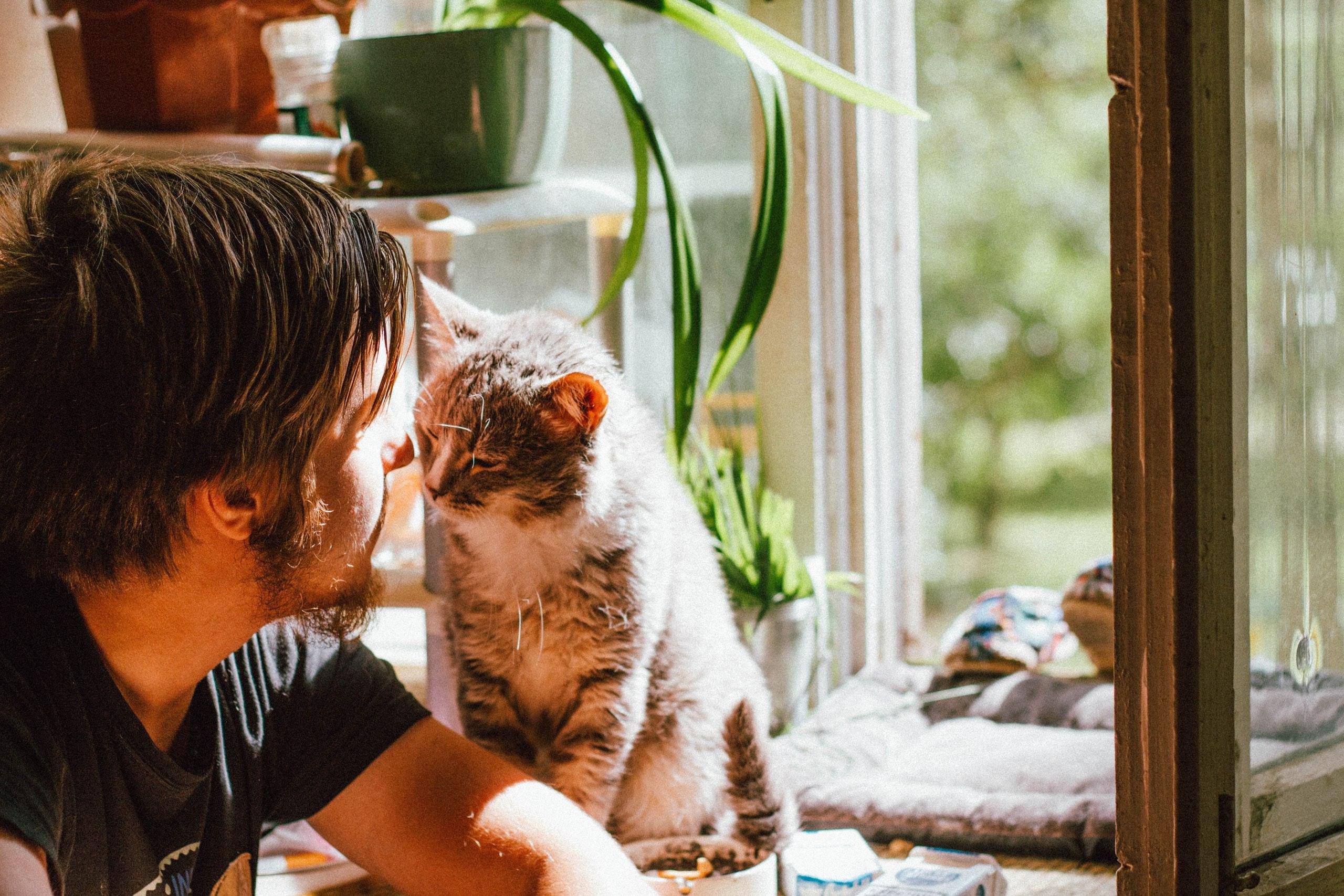 Ha egy macskával tudsz bánni, akkor a nőkkel is?!