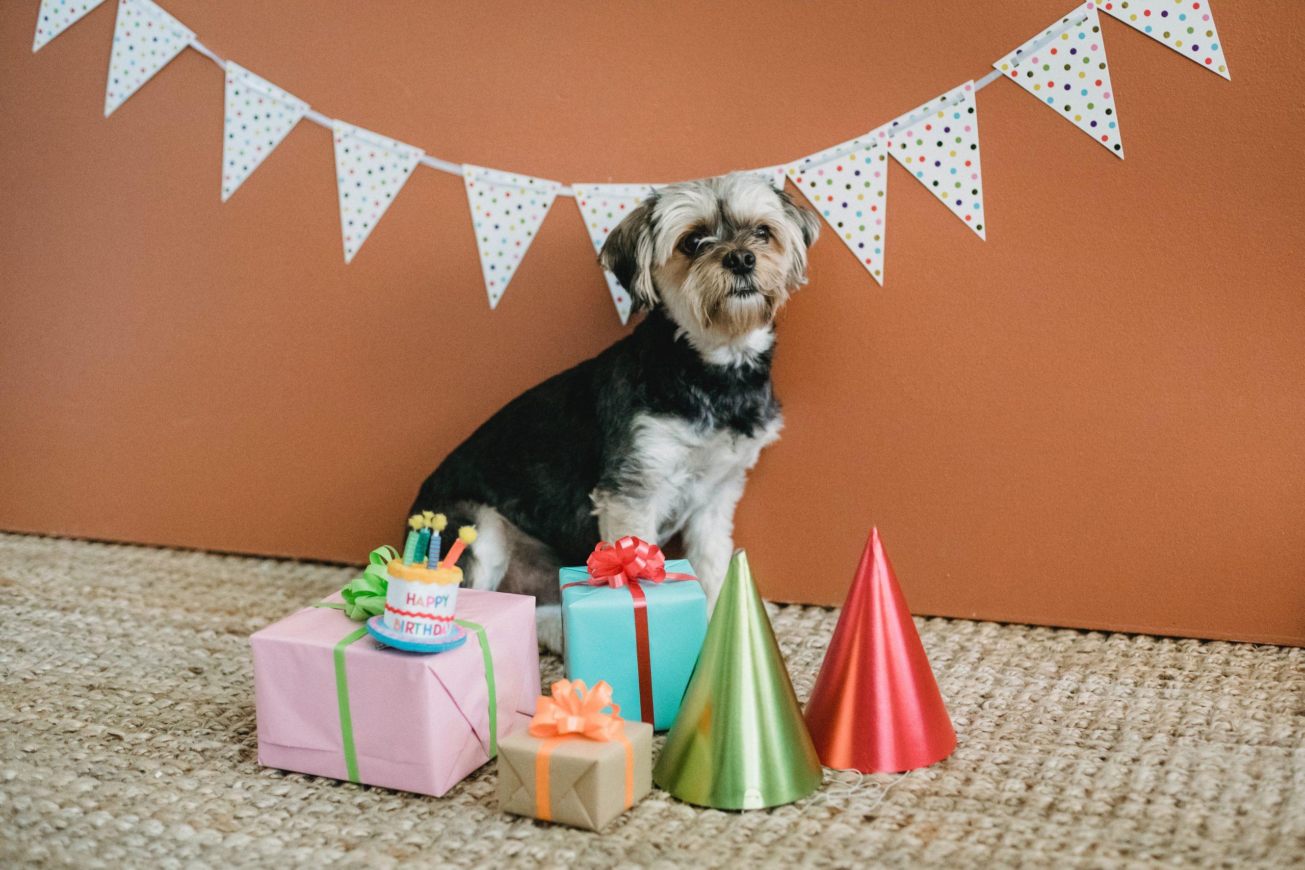 Megünneplem a kutyám szülinapját, és nyugodtan nézz hülyének érte!